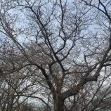 『咲いてますよ』の画像