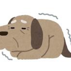 【衝撃】老犬になっても飼い主を遊びに誘う理由がヤバすぎて咽び泣く…