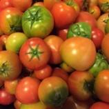 『トマトからのメッセージ(光の種のキッチンにて)』の画像
