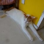 NPO法人 みなしご救援隊 犬猫譲渡センター 広島本部のブログ