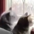 2匹のネコが並んで外を見ていた。チクタク、チクタク♪ → 1匹はメトロノームになったようです…