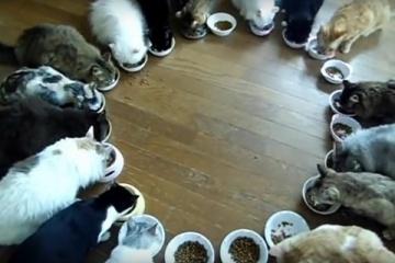 猫大家族が全員集合!猫がみんなでお正月。