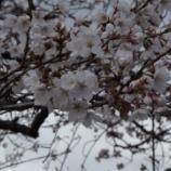 『突然の春です』の画像