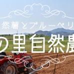 山の里自然農園のおいしゃん日記 ~自然薯とブルーベリー~