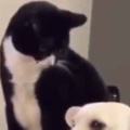 ネコが犬の隣に座っていた。いったい何が始まるんです? → こうなる…
