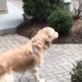 イヌが飼い主と会うのは2週間ぶり。どうなるのかな? → こうなります…