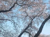 【乃木坂46】能條愛未、彼氏と同じ写真を755に投稿していたwwwww(画像あり)