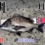 『苦手な潮の流れ!周防大島の黒鯛(チヌ)釣り #020』の画像