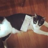 実家のハナちゃんが子猫を生みました。のサムネイル