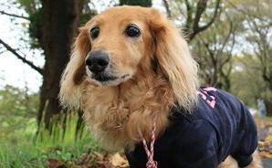 「なっかなか進まない」犬の散歩