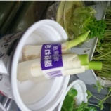 『ガーデニングやキッチンでできる再生野菜 ヘタや芯で楽しく育てよう』の画像