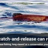 『釣りのキャッチ&リリースの影響』の画像