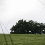 『【北海道ひとり旅】富良野・美瑛の旅『平行四辺形の木』』の画像