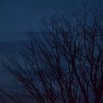 【画像】夜の森の怖さは異常