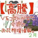 【高騰】V系コートが出た今週のお花相場情報。