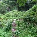 夏草に埋もれた茶山と謎のフン