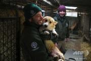 【韓国】食用犬の飼育施設で約200匹の救出を開始、米とカナダに移送…7割の韓国人が犬肉食べず