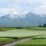 『蕎麦畑』の画像