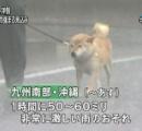 悪天候に晒される柴犬が可愛いと話題