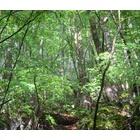 『生き物の多い森』の画像