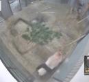 上野動物公園 シャンシャン 監視所