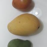 『愛文だけがマンゴーじゃない マンゴーランキング』の画像