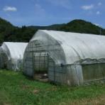 有機栽培で産地直送!わたなべ農園の健康野菜ブログ