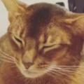 ネコが私のお腹の上でくつろいでいた。さっきから動かない。どうしたの? → こうなった…