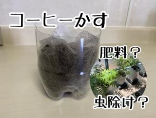 コーヒーかすの再活用で肥料や虫よけになるか?~途中報告 その1~