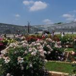 『5月のバラ;神代植物園Ⅰ』の画像