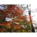 『榛名山ゆったりトレッキング(10/30)開催』の画像
