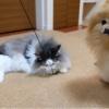 ハッスルする猫の下半身が可愛すぎる件