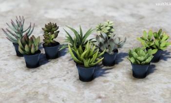 鉢植えの多肉植物