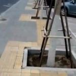 【動画】中国、歩道に街路樹を移植したために、点字ブロックが150m間で蛇行18回