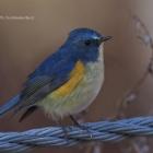 『投稿:AFボーグ77EDIIによる手持ち野鳥画像 2021/03/12』の画像