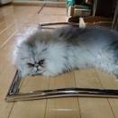 猫シャシンのブームに乗って載せる