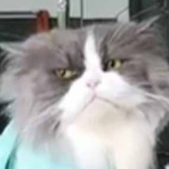 ネコが床屋さんにやってきた。今日はどうします? おまかせで → 猫はこうなる…