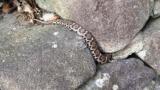 庭にヘビいるww(※画像あり)