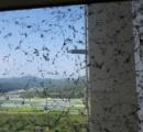 【※閲覧注意】入居したてのマンションがクモに占拠される 壁一面にクモがびっしり