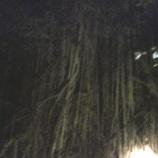 『オーストラリア ケアンズ旅行記16 有袋類満載!ケアンズの自然を堪能できるナイトツアー』の画像