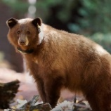 『クマさんのGPS』の画像