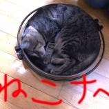 『ねこナベ・ねこ鍋・猫鍋・ネコナベ』の画像