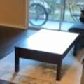 うちのネコは犬のように「取ってこい」します。テーブルの向こうにオモチャを投げてみた → こうなる…