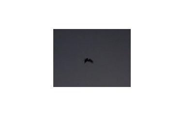 『まだ飛んでいる』の画像