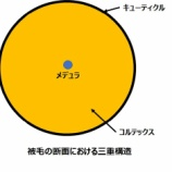 『光マイクロバブルとマイクロバブルフォーム(3550回記念)(18)』の画像