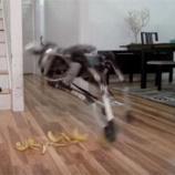 『バナナで滑るロボットから見えること【1317日目】』の画像