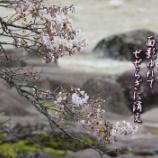 『厳美の桜』の画像