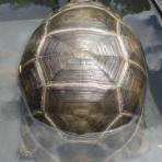 アルダブラゾウガメの飼育を追及するブログ