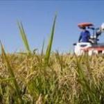 農業って若者がガチれば割と無双出来るよな?