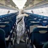 『米中韓からの入国拒否、航空業界はかつてない逆風で株価大暴落中だが120%倒産はしない。』の画像